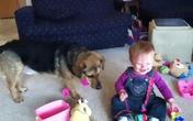 Bé dễ thương cười hết cỡ khi chơi đùa với cún
